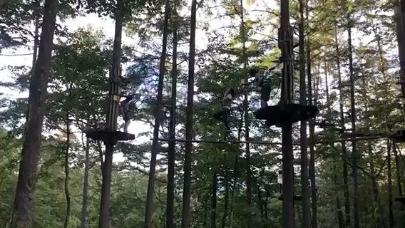 Forest Adventure Odawara