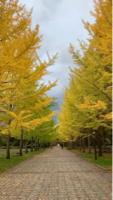 山形県総合運動公園