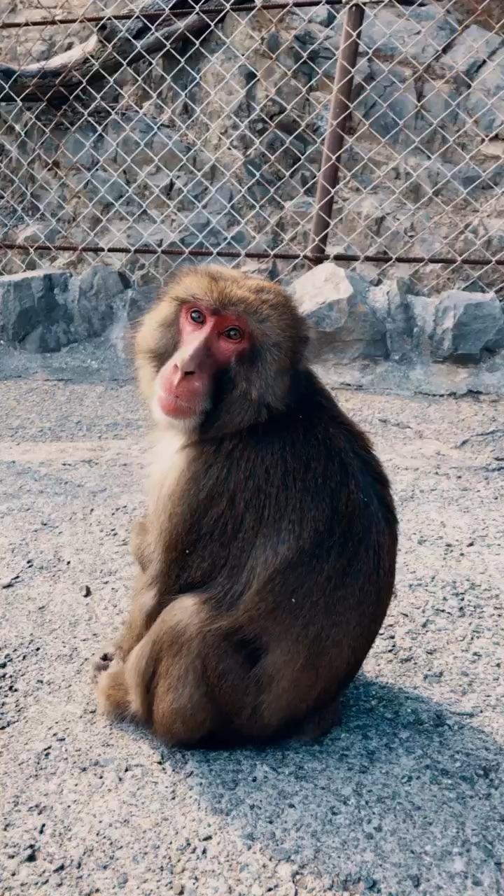 Awaji Monkey Center 淡路島モンキーセンター